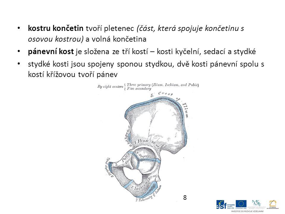kostru končetin tvoří pletenec (část, která spojuje končetinu s osovou kostrou) a volná končetina pánevní kost je složena ze tří kostí – kosti kyčelní, sedací a stydké stydké kosti jsou spojeny sponou stydkou, dvě kosti pánevní spolu s kostí křížovou tvoří pánev 8