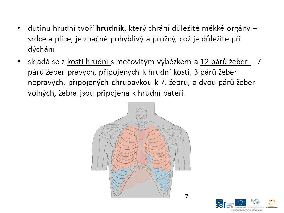 dutinu hrudní tvoří hrudník, který chrání důležité měkké orgány – srdce a plíce, je značně pohyblivý a pružný, což je důležité při dýchání skládá se z kosti hrudní s mečovitým výběžkem a 12 párů žeber – 7 párů žeber pravých, připojených k hrudní kosti, 3 párů žeber nepravých, připojených chrupavkou k 7.