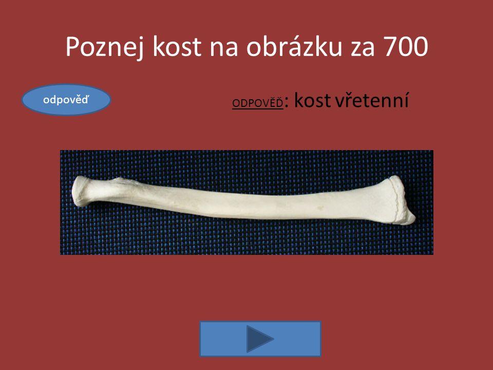Poznej kost na obrázku za 700 ODPOVĚĎ : kost vřetenní odpověď