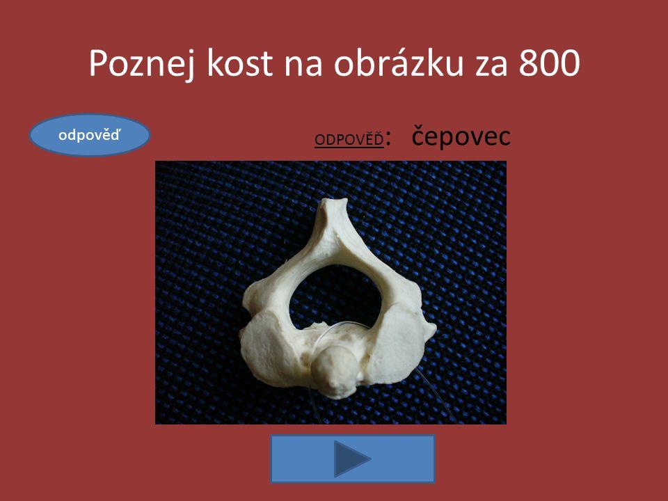 Poznej kost na obrázku za 800 ODPOVĚĎ : čepovec odpověď