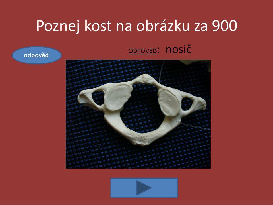 Poznej kost na obrázku za 900 ODPOVĚĎ : nosič odpověď