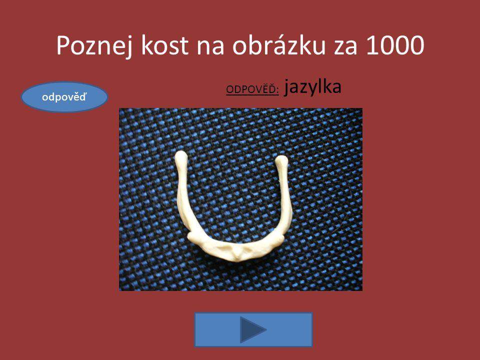 Poznej kost na obrázku za 1000 ODPOVĚĎ: jazylka odpověď
