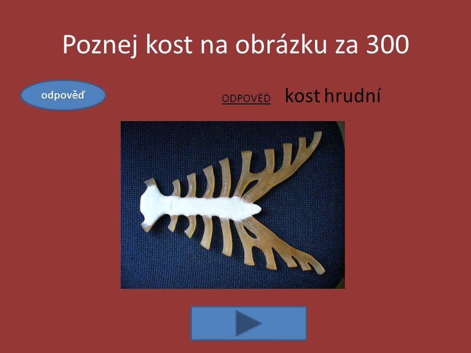 Kosti za 300 ODPOVĚĎ: uvnitř dlouhých kostí, krvetvorba Vysvětli, kde se nachází kostní dřeň a k čemu slouží.