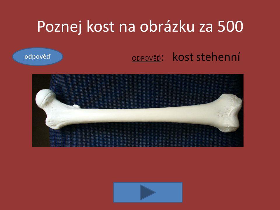 Kosti za 500 ODPOVĚĎ: kloubní jamka a hlavice, kloubní pouzdro, maz a chrupavka Popiš stavbu kloubu odpověď