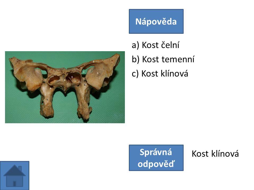 a) Kost čelní b) Kost temenní c) Kost klínová Nápověda Správná odpověď Kost klínová