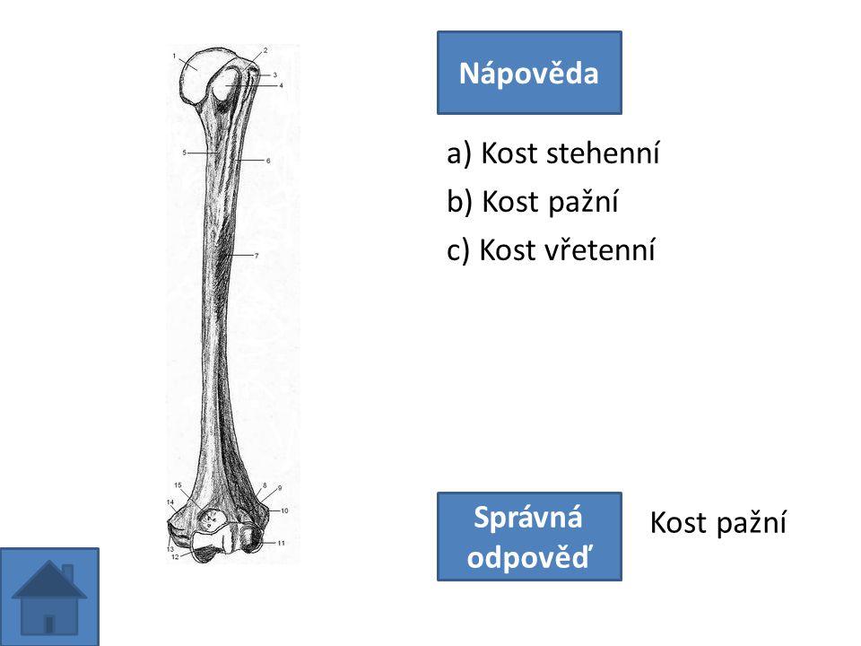 a) Kost stehenní b) Kost pažní c) Kost vřetenní Nápověda Správná odpověď Kost pažní