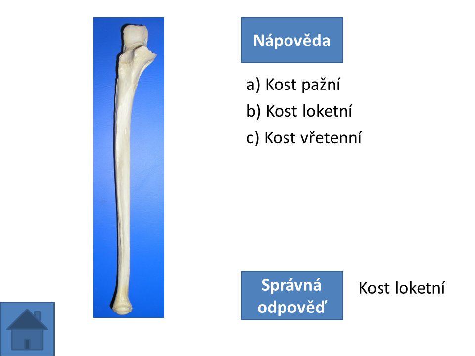a) Kost pažní b) Kost loketní c) Kost vřetenní Nápověda Správná odpověď Kost loketní