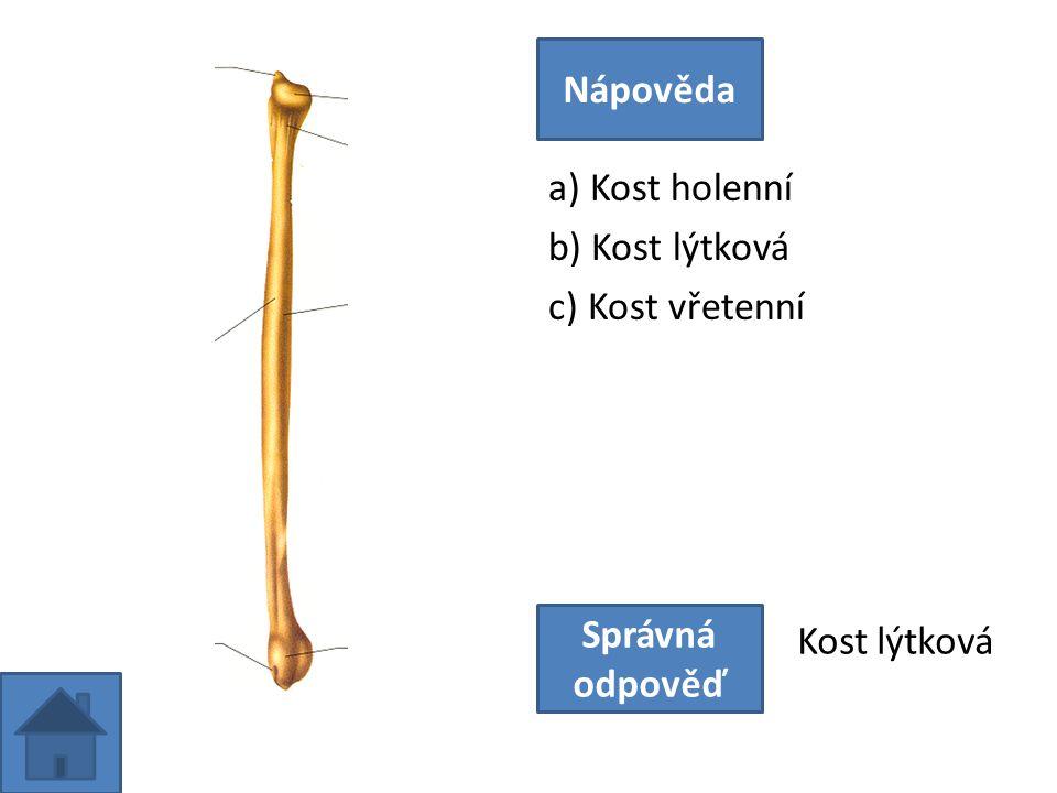 a) Kost holenní b) Kost lýtková c) Kost vřetenní Nápověda Správná odpověď Kost lýtková