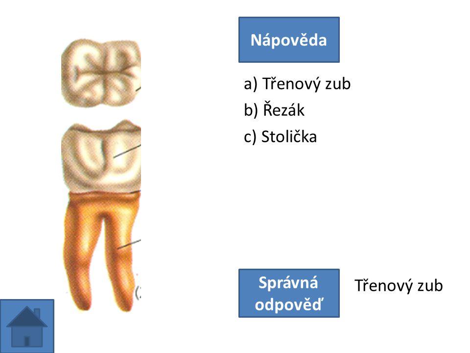 a) Třenový zub b) Řezák c) Stolička Nápověda Správná odpověď Třenový zub