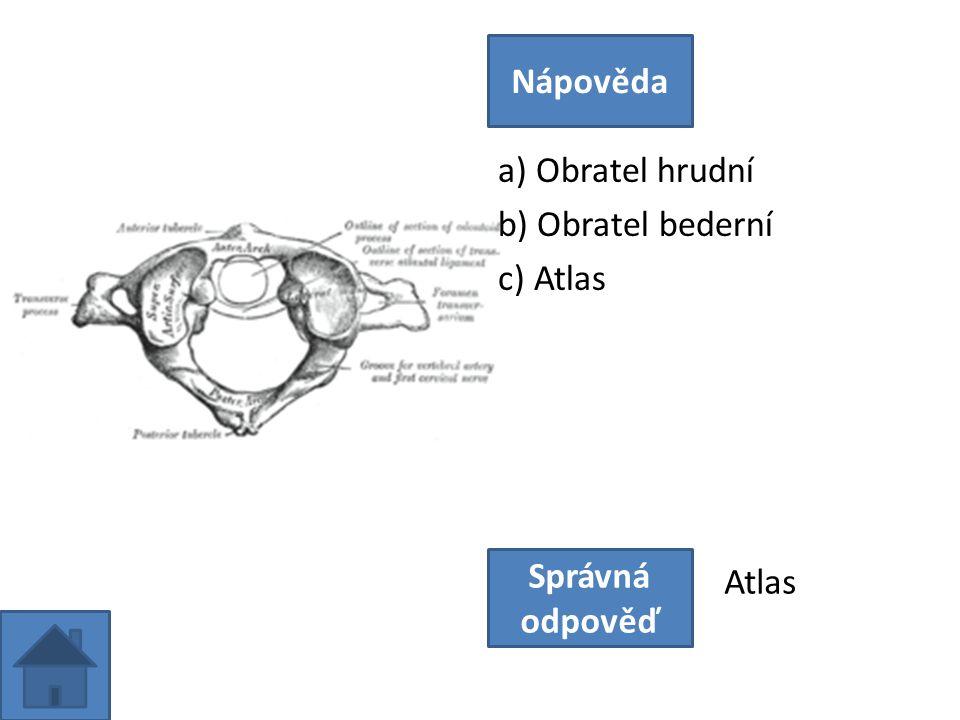 a) Obratel hrudní b) Obratel bederní c) Atlas Nápověda Správná odpověď Atlas