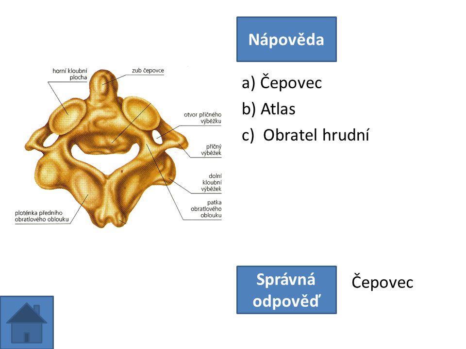 a) Čepovec b) Atlas c) Obratel hrudní Nápověda Správná odpověď Čepovec