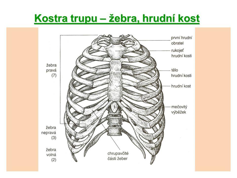 Kostra hlavy část mozková -spodina lebeční: kost týlní (os occipitale) kost klínová (os sphenoidale) 2 kosti spánkové (ossa temporalia) kost čichová (os ethmoidale) -klenba lebeční: kost čelní (os frontale) 2 kosti temenní (ossa parietalia)