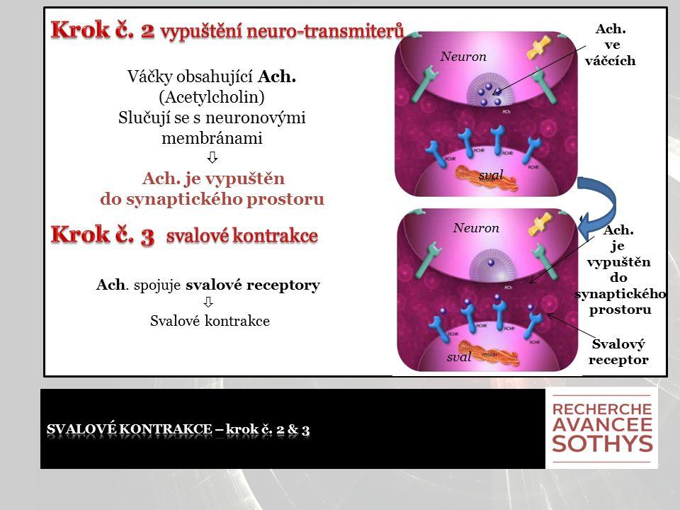 Váčky obsahující Ach. (Acetylcholin) Slučují se s neuronovými membránami  Ach. je vypuštěn do synaptického prostoru Ach. spojuje svalové receptory 