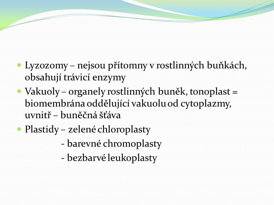 Lyzozomy – nejsou přítomny v rostlinných buňkách, obsahují trávicí enzymy Vakuoly – organely rostlinných buněk, tonoplast = biomembrána oddělující vak