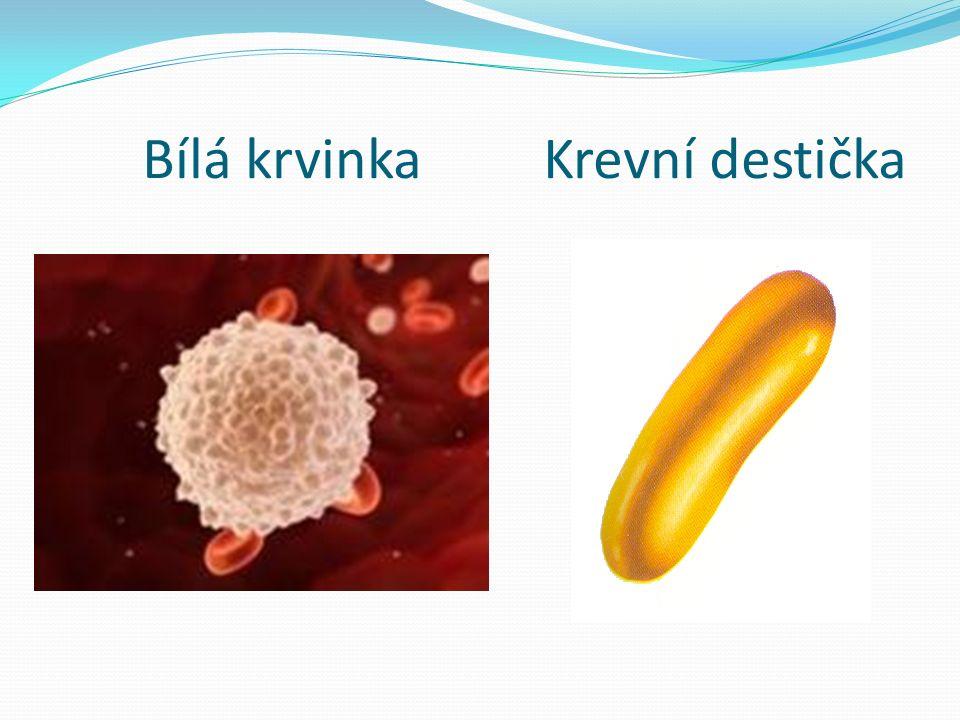 Bílá krvinka Krevní destička