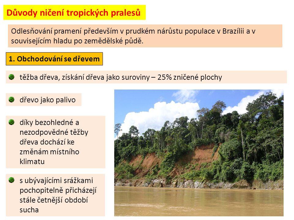 Důvody ničení tropických pralesů těžba dřeva, získání dřeva jako suroviny – 25% zničené plochy dřevo jako palivo Odlesňování pramení především v prudkém nárůstu populace v Brazílii a v souvisejícím hladu po zemědělské půdě.
