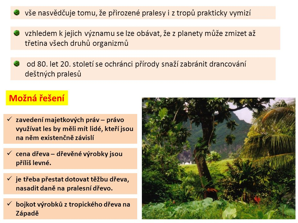 vše nasvědčuje tomu, že přirozené pralesy i z tropů prakticky vymizí od 80.