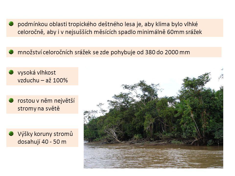 rostou v něm největší stromy na světě Výšky koruny stromů dosahují 40 - 50 m vysoká vlhkost vzduchu – až 100% podmínkou oblasti tropického deštného lesa je, aby klima bylo vlhké celoročně, aby i v nejsušších měsících spadlo minimálně 60mm srážek množství celoročních srážek se zde pohybuje od 380 do 2000 mm