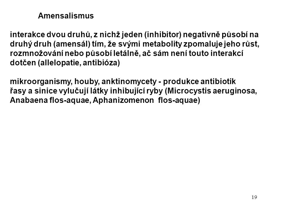 19 Amensalismus interakce dvou druhů, z nichž jeden (inhibitor) negativně působí na druhý druh (amensál) tím, že svými metabolity zpomaluje jeho růst, rozmnožování nebo působí letálně, ač sám není touto interakcí dotčen (allelopatie, antibióza) mikroorganismy, houby, anktinomycety - produkce antibiotik řasy a sinice vylučují látky inhibující ryby (Microcystis aeruginosa, Anabaena flos-aquae, Aphanizomenon flos-aquae)