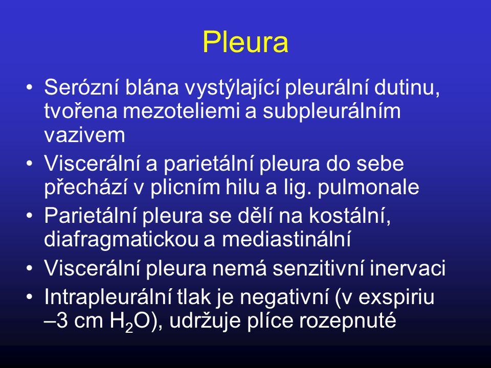 Pleura Serózní blána vystýlající pleurální dutinu, tvořena mezoteliemi a subpleurálním vazivem Viscerální a parietální pleura do sebe přechází v plicn