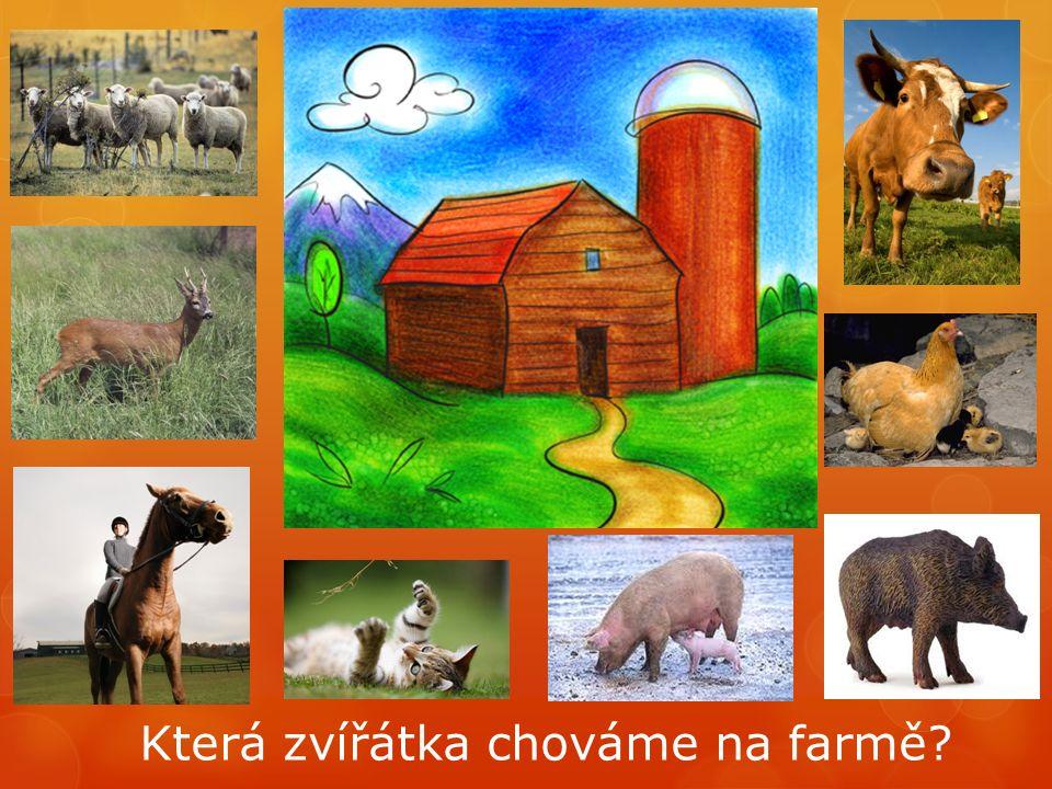 Která zvířátka chováme na farmě?