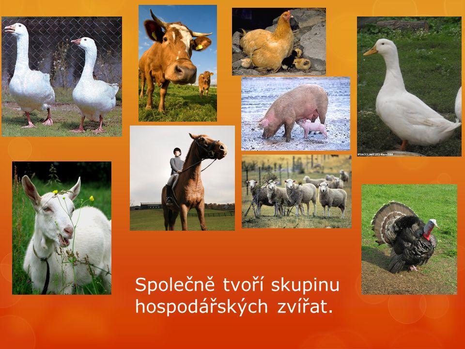 Společně tvoří skupinu hospodářských zvířat.