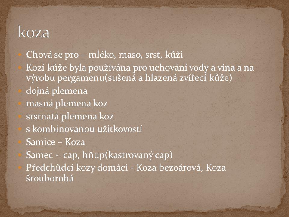 Chová se pro – mléko, maso, srst, kůži Kozí kůže byla používána pro uchování vody a vína a na výrobu pergamenu(sušená a hlazená zvířecí kůže) dojná plemena masná plemena koz srstnatá plemena koz s kombinovanou užitkovostí Samice – Koza Samec - cap, hňup(kastrovaný cap) Předchůdci kozy domácí - Koza bezoárová, Koza šrouborohá