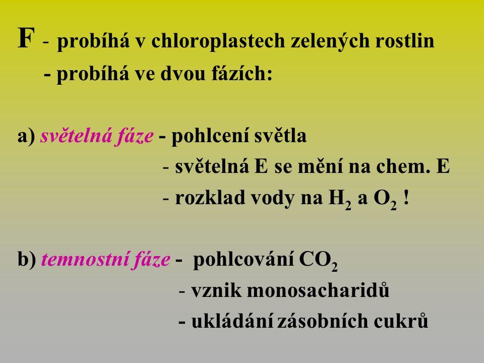 F - probíhá v chloroplastech zelených rostlin - probíhá ve dvou fázích: a) světelná fáze - pohlcení světla - světelná E se mění na chem.