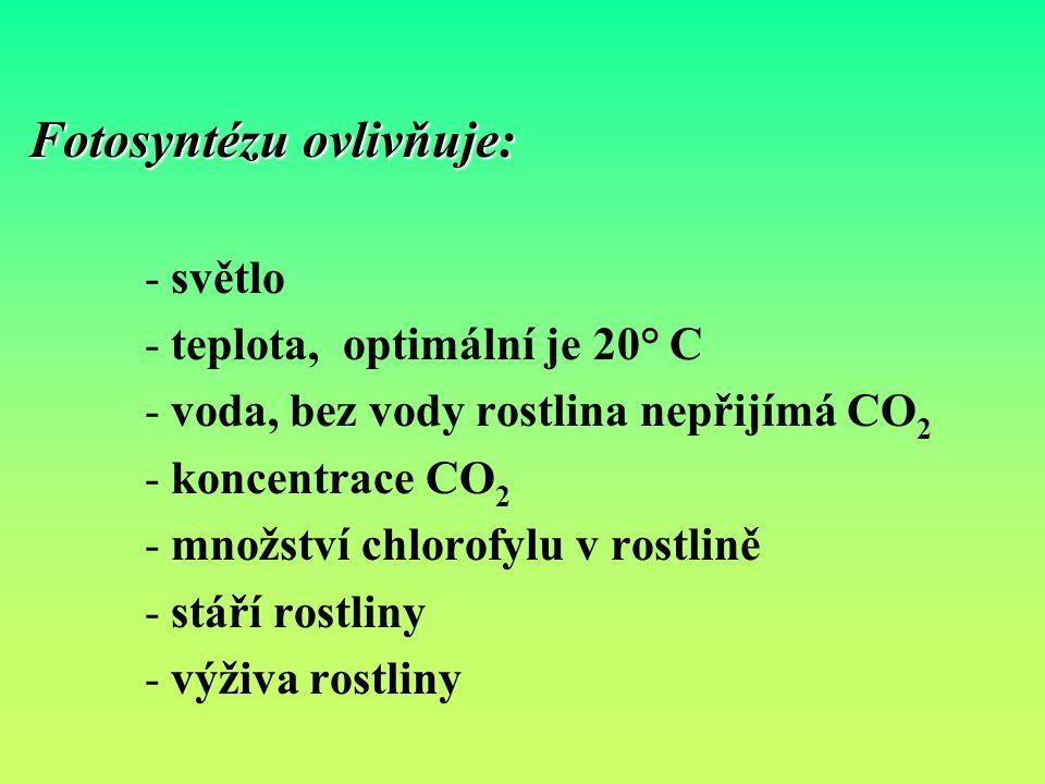 Fotosyntézu ovlivňuje: - světlo - teplota, optimální je 20° C - voda, bez vody rostlina nepřijímá CO 2 - koncentrace CO 2 - množství chlorofylu v rostlině - stáří rostliny - výživa rostliny