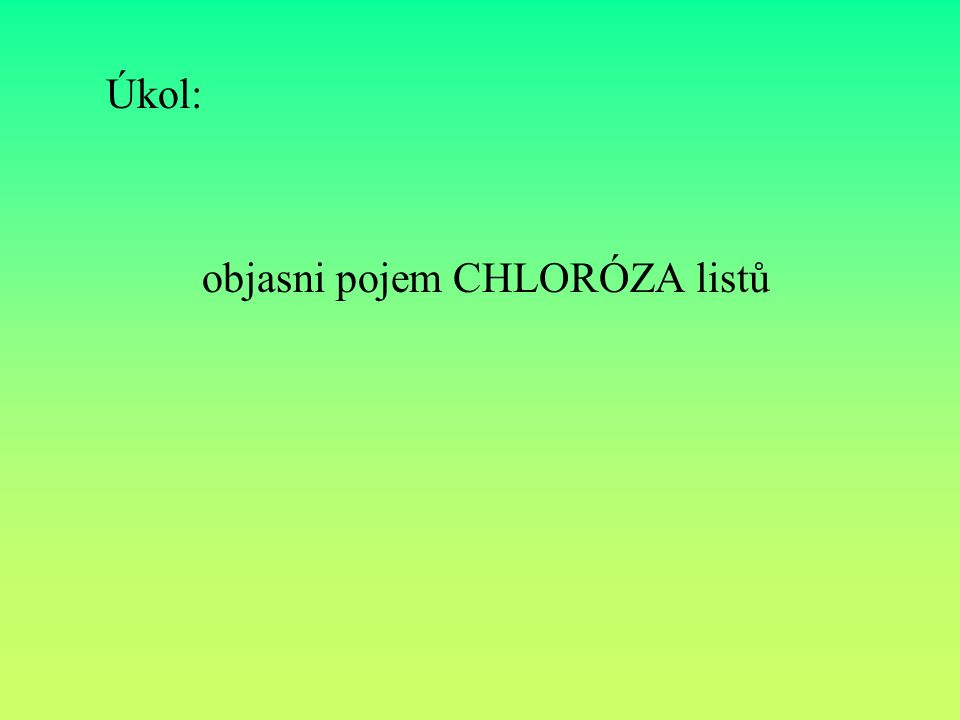 Odpověď: Chloróza se projevuje postupným žloutnutím listové čepele, žilnatina většinou zůstává zelená.