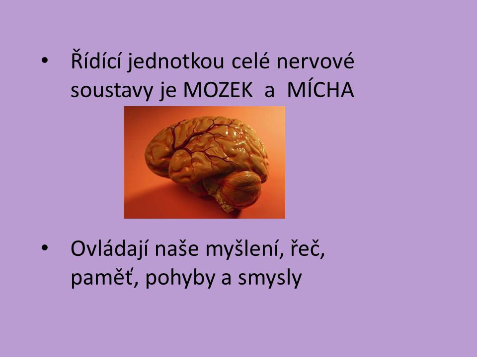 Řídící jednotkou celé nervové soustavy je MOZEK a MÍCHA Ovládají naše myšlení, řeč, paměť, pohyby a smysly