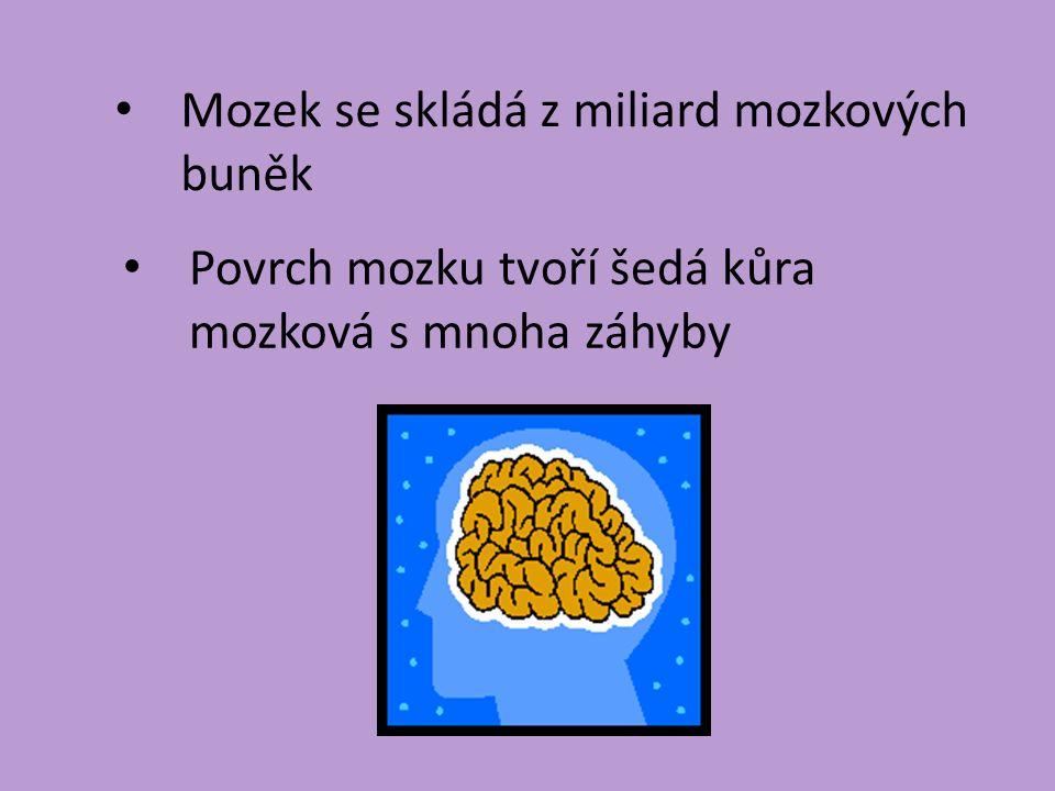 Mozek se skládá z miliard mozkových buněk Povrch mozku tvoří šedá kůra mozková s mnoha záhyby