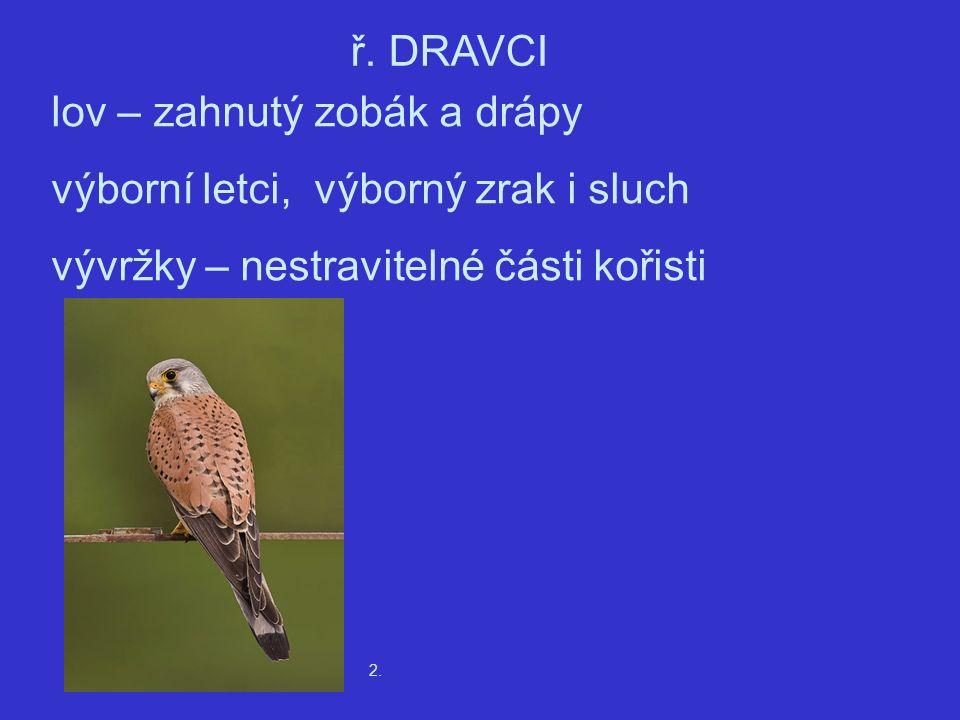2. ř. DRAVCI lov – zahnutý zobák a drápy výborní letci, výborný zrak i sluch vývržky – nestravitelné části kořisti