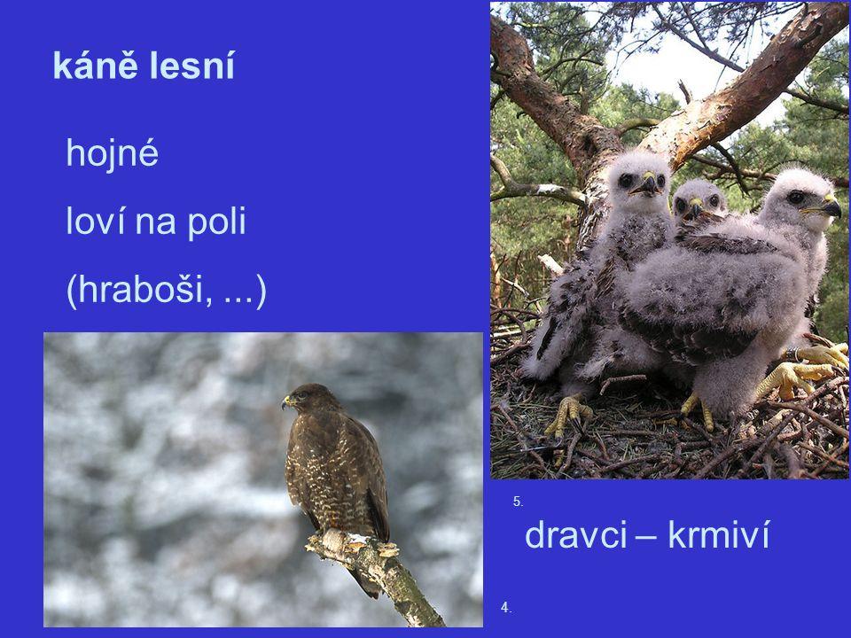 4. káně lesní hojné loví na poli (hraboši,...) 5. dravci – krmiví
