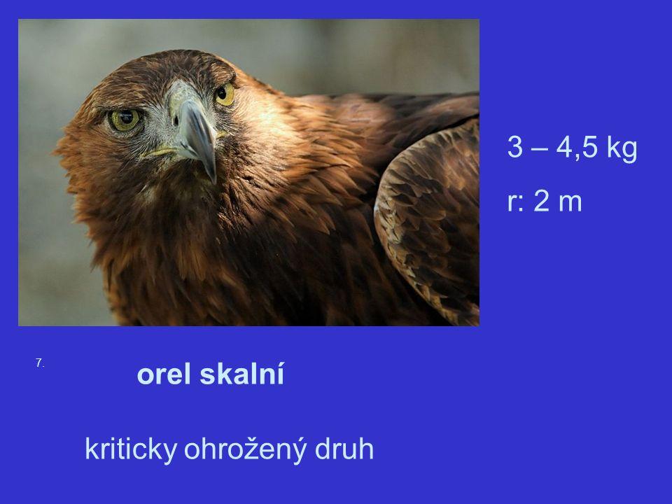 7. orel skalní 3 – 4,5 kg r: 2 m kriticky ohrožený druh