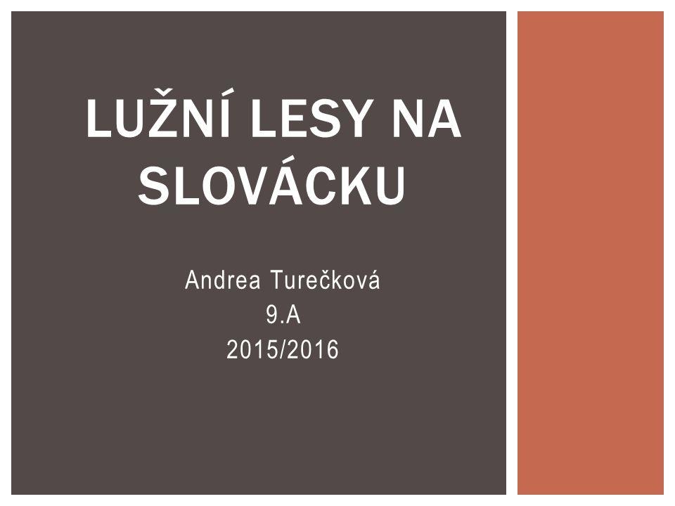 Andrea Turečková 9.A 2015/2016 LUŽNÍ LESY NA SLOVÁCKU