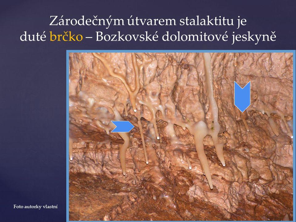 Zárodečným útvarem stalaktitu je duté brčko – Bozkovské dolomitové jeskyně Foto autorky vlastní