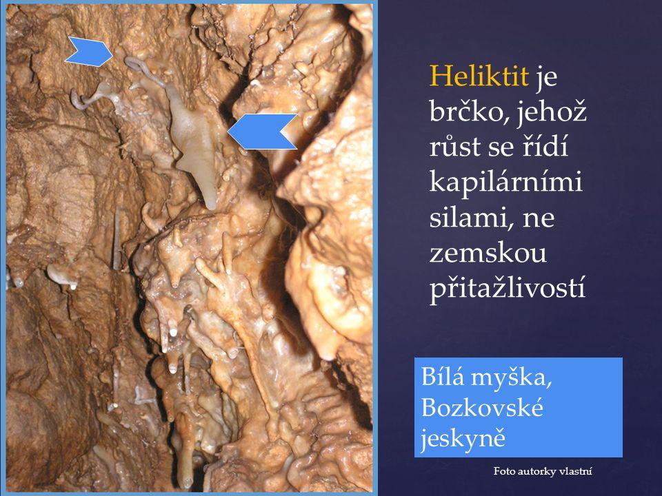 Heliktit je brčko, jehož růst se řídí kapilárními silami, ne zemskou přitažlivostí Foto autorky vlastní Bílá myška, Bozkovské jeskyně
