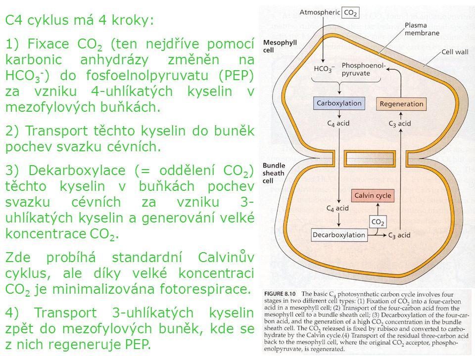 C4 cyklus má 4 kroky: 1) Fixace CO 2 (ten nejdříve pomocí karbonic anhydrázy změněn na HCO 3 - ) do fosfoelnolpyruvatu (PEP) za vzniku 4-uhlíkatých kyselin v mezofylových buňkách.