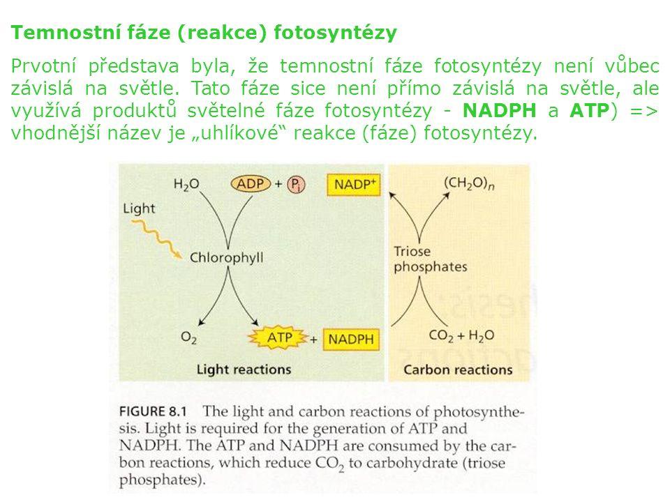 Temnostní fáze (reakce) fotosyntézy Prvotní představa byla, že temnostní fáze fotosyntézy není vůbec závislá na světle.