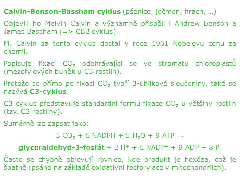 Calvin-Benson-Bassham cyklus (pšenice, ječmen, hrach, …) Objevili ho Melvin Calvin a významně přispěli i Andrew Benson a James Bassham (=> CBB cyklus).