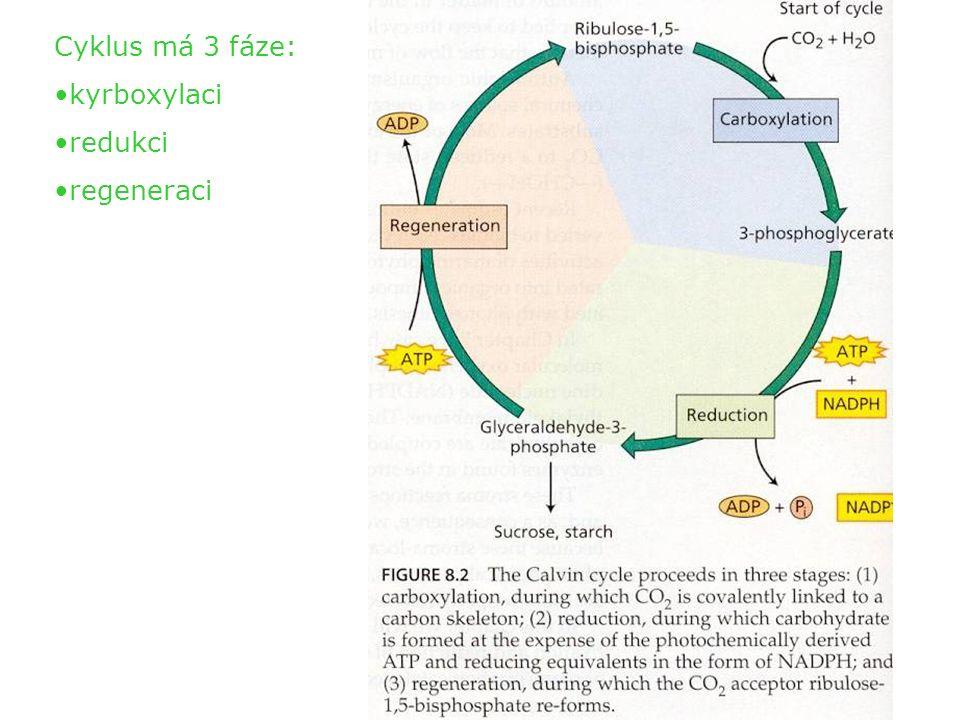 Jedná se skutečně o cyklus - karboxylace 3 molekul ribulózy-1,5- bisfosfátu (RuBP) vede ve výsledku (následným užitím i ATP a NADPH) k syntéze 1 molekuly glyceraldehydu-3-fosfát (G3P, GAP) a poté k regeneraci opět 3 molekul ribulózy-1,5- bisfosfátu.