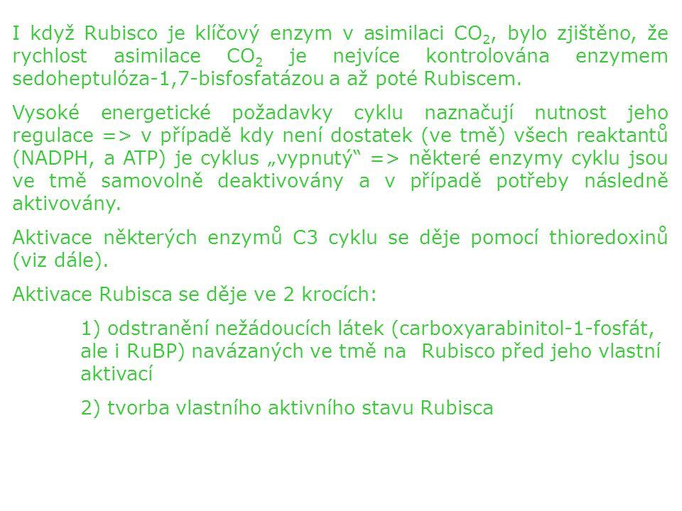 ad 1) Děje se pomocí dalšího enzymu – Rubisco aktivázy, která se aktivací Rubisca inaktivuje a poté pomocí ATP a thioredoxinů opět aktivuje.