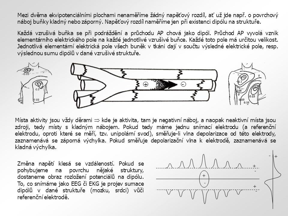 Evokovaný potenciál (EP) = potenciál generovaný činností různých struktur nervové soustavy (smyslové orgány, dostředivé a odstředivé nervy, centrální nervová soustava) stimulovaných různými, hlavně fyzikálními podněty (mechanickými, vizuálními, akustickými).