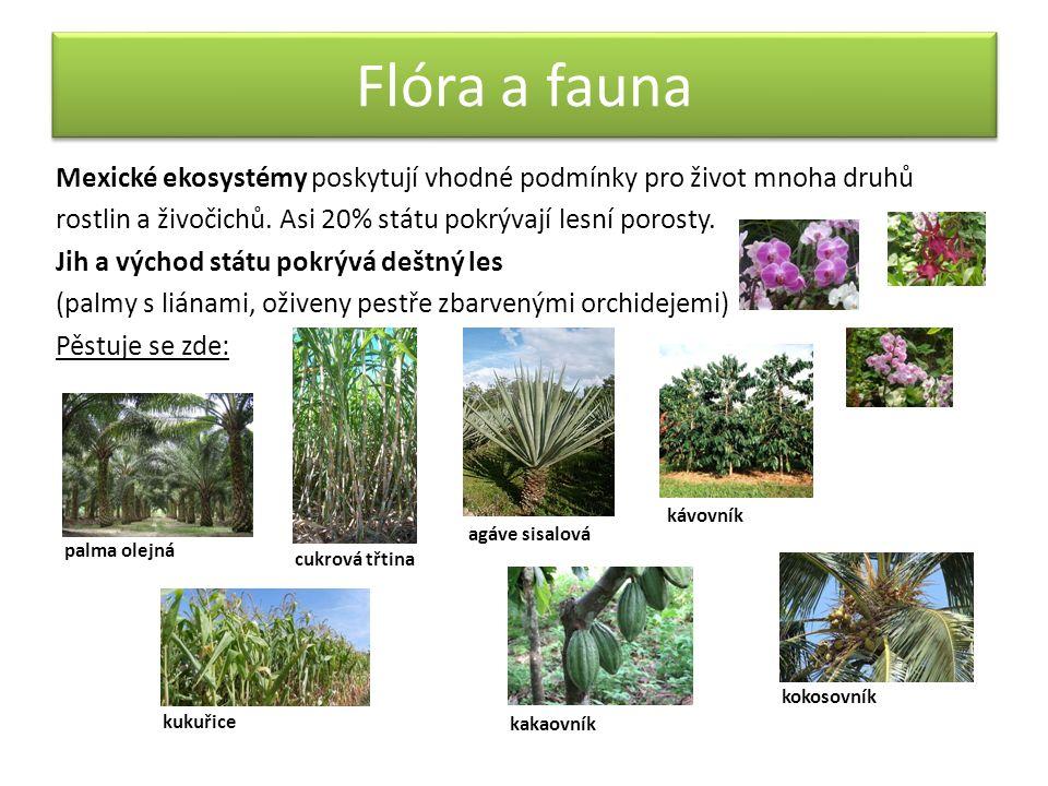 Flóra a fauna Mexické ekosystémy poskytují vhodné podmínky pro život mnoha druhů rostlin a živočichů. Asi 20% státu pokrývají lesní porosty. Jih a výc