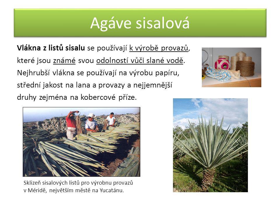 Flóra a fauna Kaktusy a jiné rostliny snášející dlouhodobé sucho rostou v nejsušších oblastech na severu země.