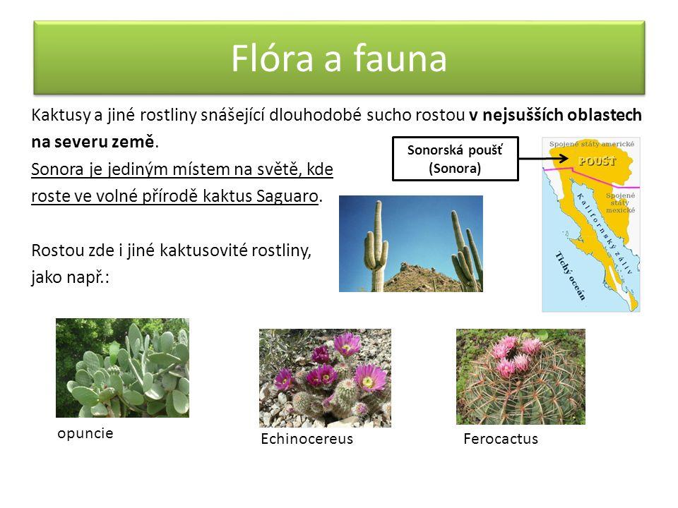 Flóra a fauna Kaktusy a jiné rostliny snášející dlouhodobé sucho rostou v nejsušších oblastech na severu země. Sonora je jediným místem na světě, kde