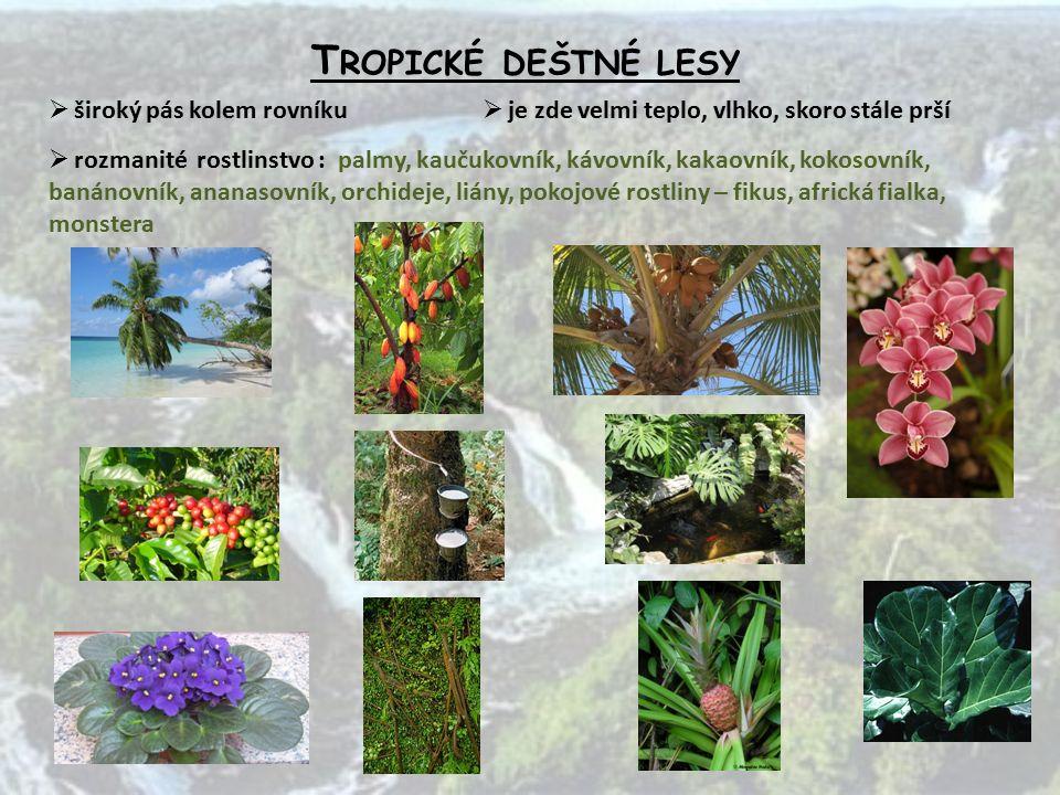 T ROPICKÉ DEŠTNÉ LESY  široký pás kolem rovníku  je zde velmi teplo, vlhko, skoro stále prší  rozmanité rostlinstvo : palmy, kaučukovník, kávovník, kakaovník, kokosovník, banánovník, ananasovník, orchideje, liány, pokojové rostliny – fikus, africká fialka, monstera