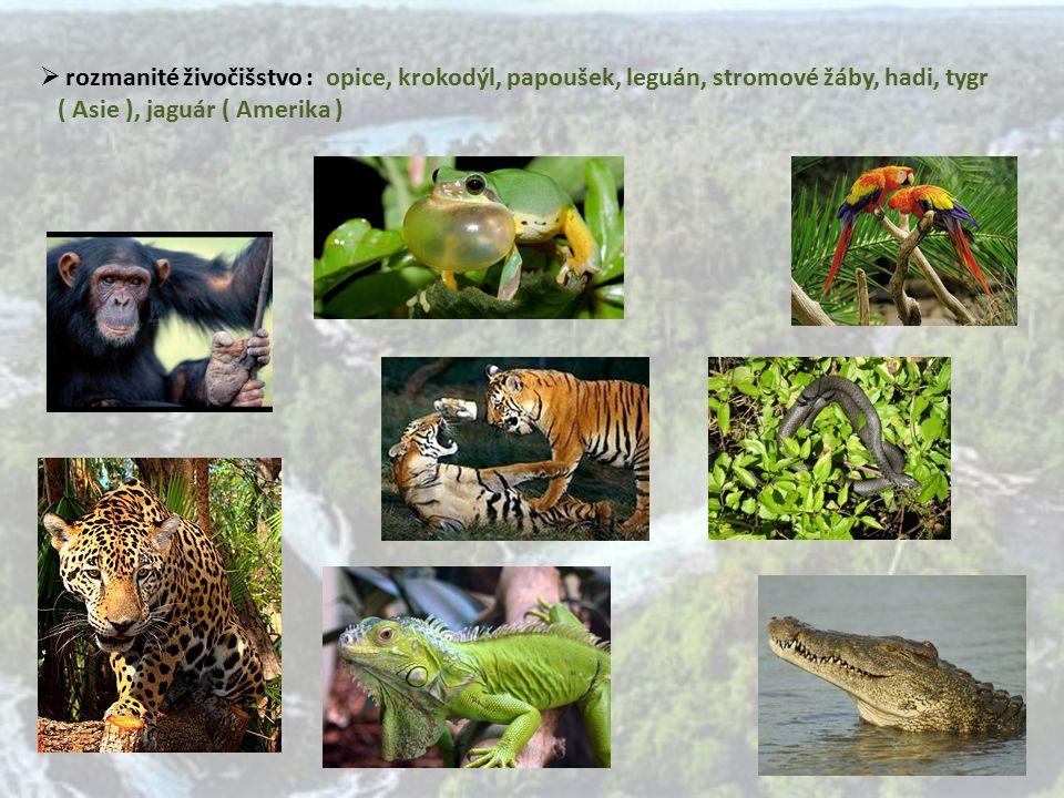  rozmanité živočišstvo : opice, krokodýl, papoušek, leguán, stromové žáby, hadi, tygr ( Asie ), jaguár ( Amerika )