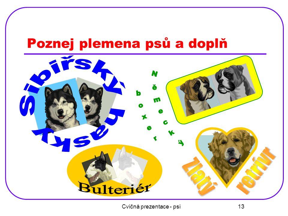 Cvičná prezentace - psi 13 Poznej plemena psů a doplň